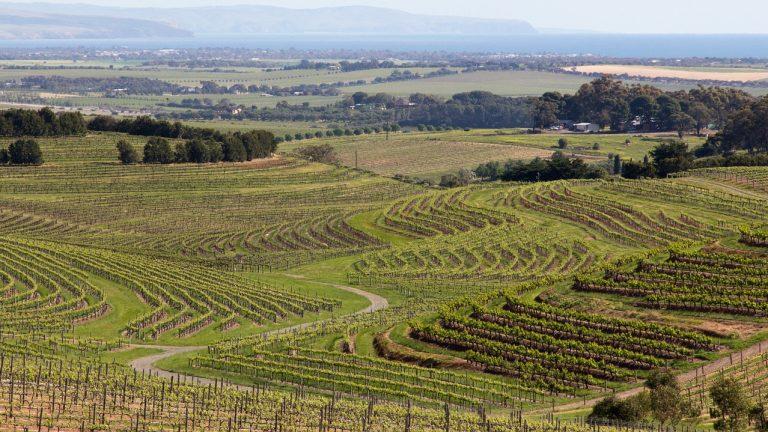 Australischer Wein