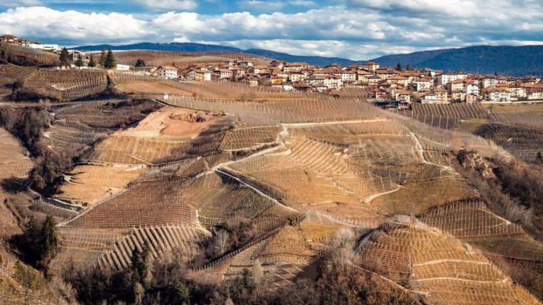 I 5 vitigni autoctoni Italiani apprezzati nel mondo